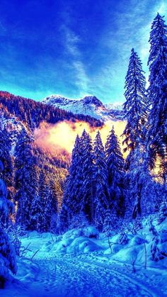 Winter in the forest ~ Dreamy Nature Bob Ross, Beautiful World, Beautiful Places, Beautiful Sunset, Forest Painting, Winter Painting, Winter Light, Best Places To Live, Winter Wonder