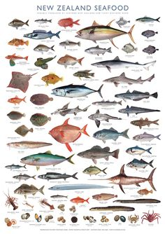 The secret behind New Zealand's beloved seafood poster – Sea Food Image Of Fish, Fish And Chip Shop, Kiwiana, Sea Monsters, Fish Art, Free Prints, Sea Creatures, Art Forms, New Zealand