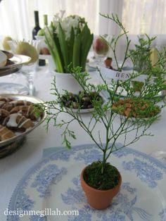 Design Megillah: Tu B'Shevat Seder Table