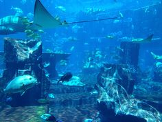 The Lost City of Atlantis - Can it be one of the weirdest places on Earth if no one knows where it is and it's actually just a legend? Description from pinterest.com. I searched for this on bing.com/images