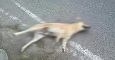 Salvar a los perros callejeritos en Arequipa - Perú de la matanza sin razón alguna