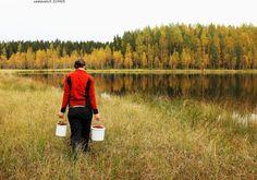 Marjassa - karpalo isokarpalo marjanpoiminta marjanpoimija marjastus henkilö marjassa kädet kädessä käsissä suo räme neva letto suolla syksy kosteikko järvi järvenranta lampi metsälampi verovapaa harrastus ämpäri ämpärit ämpäreissä astia keräilyastia kantaa Vaccinium oxycoccos vitamiini suokasvi suokasvillisuus terveys terveellinen nainen syksy marjassa syys c-vitamiini ihminen ihmiset nainen naiset  vapaa-aika verovapaa luonto