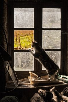 My dads cat, Maggie, watching the world go by through the window of the farmhouse, an on going restoration project, near Cassaniouze France