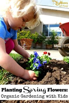 Planting spring flowers with kids is fun and easy. This tutorial includes easy tips on how to get kids started with organic gardening. Gardening with Kids | Spring Gardening | Spring Projects | Nature Study | How to plant flowers