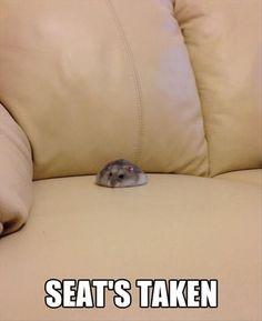 Dwarf Hamster - Dis spot's mine!