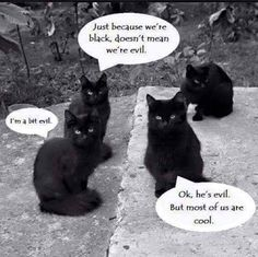 goth cat meme - Google Search
