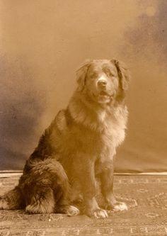 Doggie's own portrait via @KaufmannsPuppy