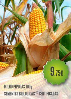 Milho Pipocas Biológico - Variedade de sementes pequenas (10 sementes por…
