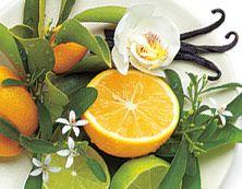 Vanille Citron