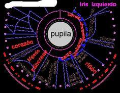 Iriologia - Un Universo en nuestro iris - La Falda