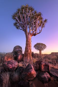 Gems of Namibia - Anshar Photography Quiver, Tree Art, World Cultures, Habitats, Fine Art Prints, Beautiful Places, Deserts, Around The Worlds, Pictures