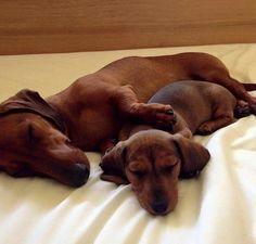 sleeping doxies