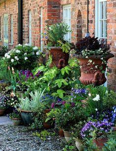 Front Door Potted Plants