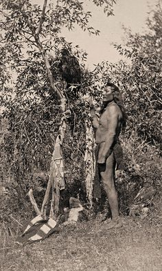 """""""An eagle, the property of a Uintah Ute man, is tied to the limb of a tree. Native American Pictures, Indian Pictures, Native American History, Old Pictures, American Indians, American Symbols, American Women, Old West Photos, Native Indian"""