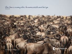 The Great Migration, African Proverb, Inspirational Wallpapers, Travel Images, Wallpaper S, Beautiful Landscapes, Kenya, Safari, The Outsiders