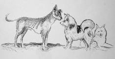The Salish Wool Dog(right) is an extinct breed of white, long-haired, Spitz-type dog that was developed and bred by the native peoples of what is now Washington State and British Columbia.  It was kept for it's fur that was used like wool.