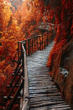 Autumn Red -- by Cristiano Spini on 500px