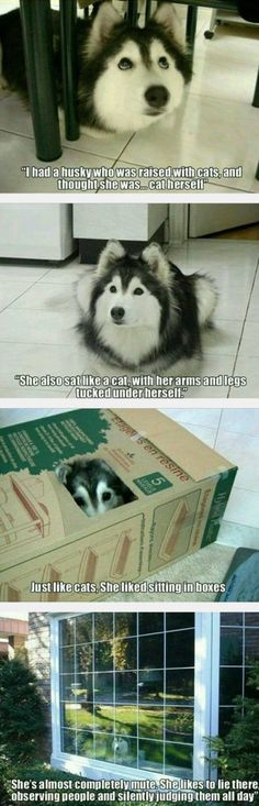 Funny Images of The Day - 36 Images