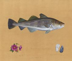 His work is what I would buy if I could ever afford art! James Prosek / James Prosek: Ocean Fishes
