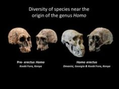 Timeline of human origins revised: New synthesis of research links changing environment with Homo's evolutionary adaptability