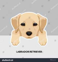 Vector Illustration Portrait of Labrador Retriever Puppy. Dog isolated