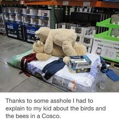 What Corona Extra does to Your Teddy Bear Costco.