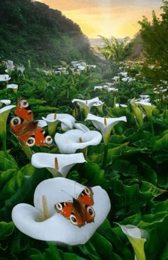 Beautiful Nature Pictures, Beautiful Flowers Wallpapers, Beautiful Nature Wallpaper, Beautiful Gif, Beautiful Butterflies, Amazing Flowers, Amazing Nature, Beautiful Birds, Flying Flowers