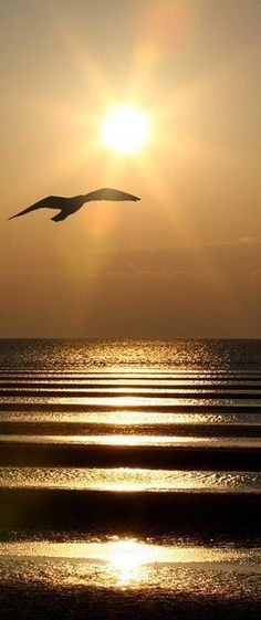Sea gull flying over rippled waves at sunset
