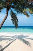 Maldives Dive Packages, Diving Safari Maldives – The Real Maldives Maldives Budget, Guest Houses, Sandy Beaches, Capital City, Diving, Sustainability, Safari, Ocean, Island