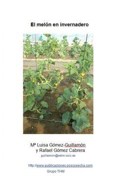 El melón en invernadero - publicaciones.poscosecha.com