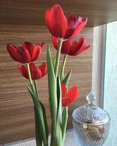 A beleza da natureza! Amo tulipas!  #apreciando #cores #vida #amores #flores #boatarde #sabadão #emcasa