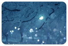 Winter night ...  Photographer Christina Makeeva