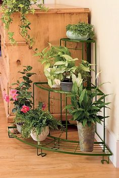 This corner plant stand is made of powder coated steel and comes in black or green. It looks great on the porch, patio, sunroom or even the living room. Balcony Plants, House Plants Decor, Plant Decor, Balcony Gardening, Potted Plants, Potted Flowers, Gardening Books, Shade Plants, Indoor Gardening