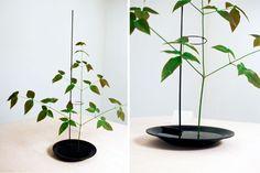 Single Flower Vase, Daniel Rybakken