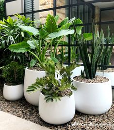 Potted Plants Patio, Balcony Plants, Outdoor Planters, Indoor Plants, Front Garden Landscape, House Landscape, Landscape Design, Garden Design, Garden Steps