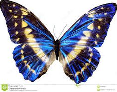 Photo about A blue butterfly is isolated on a black background with colorful sparkles around it. Image of night, black, artistic - 20136695 Blue Butterfly Wallpaper, Butterfly Painting, Butterfly Wings, Butterfly Template, Butterfly Dragon, Monarch Butterfly, Beautiful Butterfly Images, Butterfly Pictures, Beautiful Birds