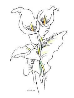 18 Ideas Tattoo Watercolor Flower Calla Lilies For 2019 Lilies Drawing, Watercolor Drawing, Watercolor Flowers, Watercolor Cards, Watercolor Paintings, Flower Paintings, Calla Lily Tattoos, Lilly Flower Tattoo, Lilly Flower Drawing