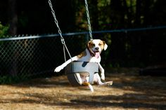Took some of our dogs to the park.  They enjoy the swing.  I think he was trying to do his Titanic impression.