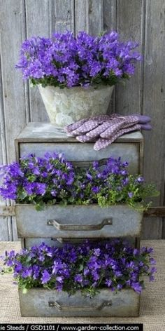 Chest of drawers planted with Campanula. Love the rectangular drawer shapes with the round vase. Stunning all the way around.