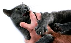 Hands, fingers, and feet are not toys. Although kittens generally are more guilty of chomping down on people's extremities while playing, cats of any age can play-bite. You recognize these kitties — they might grab your arm with their front paws while you're tickling their tummies. They also pounce and bite your hands and fingers …