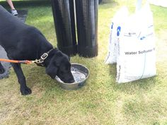 Roxy, one of our favorite customers, is enjoying some Kinetico water. Drinking Water, Roxy, Animals, Animales, Animaux, Animal, Animais