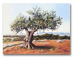 Related image Desert Trees, Centenario, Olive Tree, Jerusalem, Tango, Moose Art, Walls, Watercolor, Nature