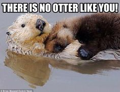 Cute otters!