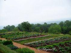 MySecretGarden: Colonial Gardens. Part 4.2 Monticello Vegetable Garden