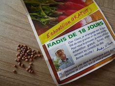 Graines de radis de 18 jours
