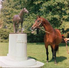 Historic Tony Leonard photo from 1970 - Triple Crown winner Citation by the grave of his sire Bull Lea at Calumet Farm