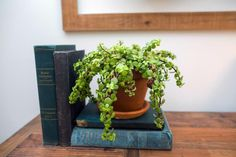 Joanna uses vintag books as the base for colorful plant life, clocks and other accessories. Here, she paired volumes by color to create a cohesive look.