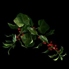 THE HOLLY AND THE IVY by Magda Indigo on 500px