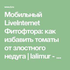 Мобильный LiveInternet Фитофтора: как избавить томаты от злостного недуга | lalimur - Дневник lalimur (Марина Манукова) |