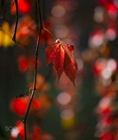 Light drops by Schafer Bokeh Photography, Autumn, Fall, Drop, Sadness, Don't Forget, Lens, Garden, Beauty